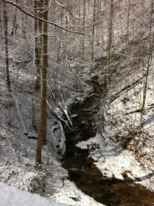 holiday-in-kentucky-nature